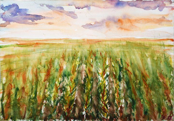 Corn field - Cvetomir Panayotov