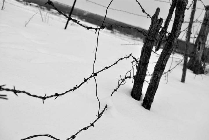 Barbed Wire - Clark Photography