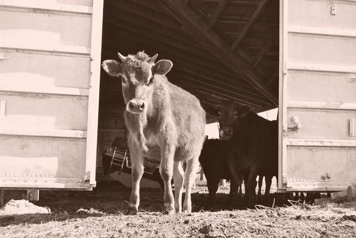 On the Farm - Clark Photography