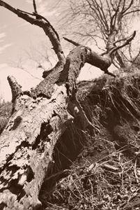 Fallin Tree