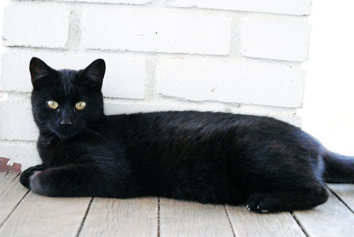 Black Cat - Clark Photography