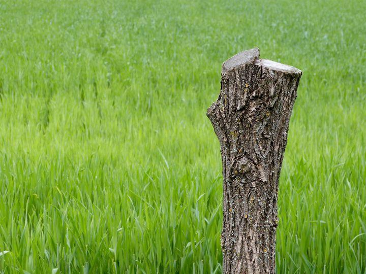 Grass - Lenz Landscape