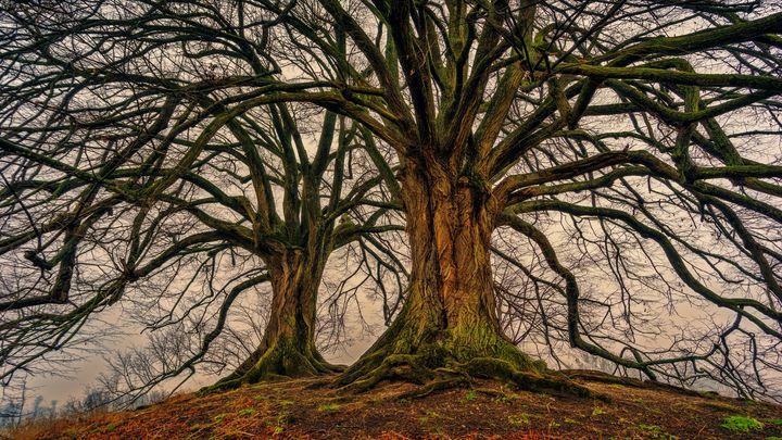 Tree of life - Lenz Landscape