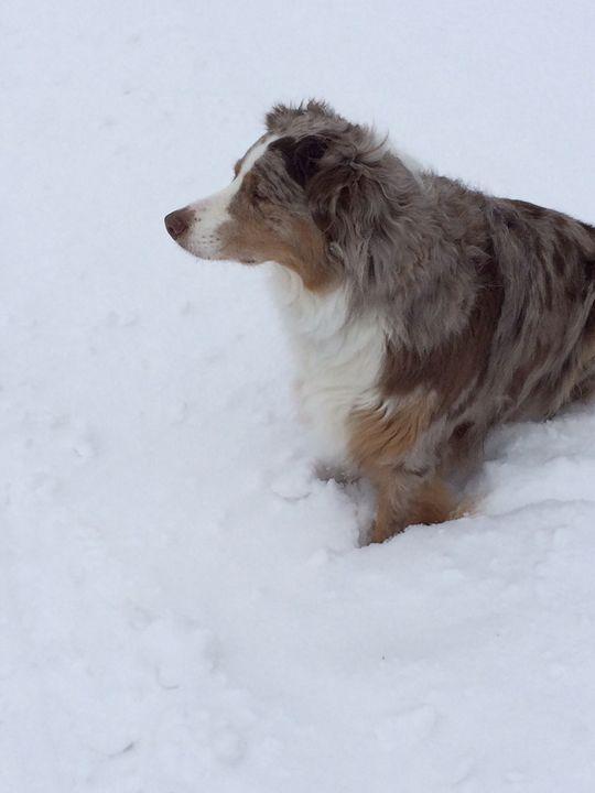 Snow dog - Photos