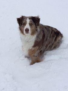 Snow dog ii - Photos