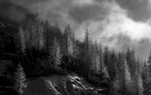 Game of fog and nature