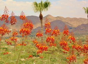 Desert Vibrance