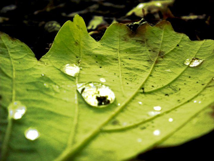 Leaf Drop - Lavender's