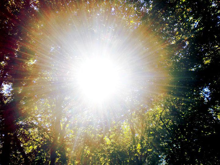 Sun Flare - Lavender's