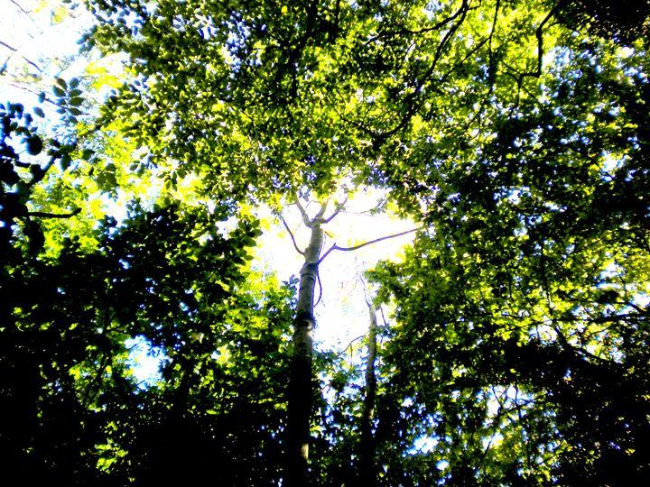 Sun Through Trees - Lavender's