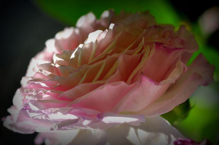 rose - Bouzana Léandre