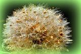 golden flower (green)