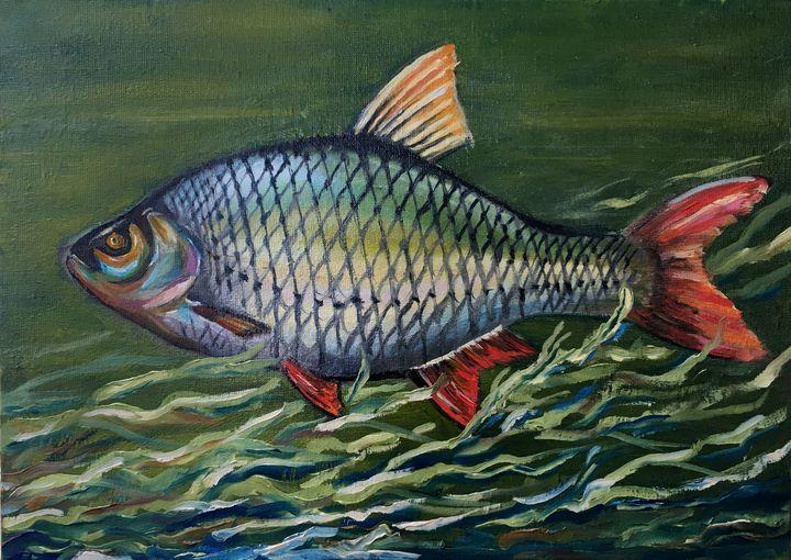 Freshwater fish - Anastasiya Kharchenko
