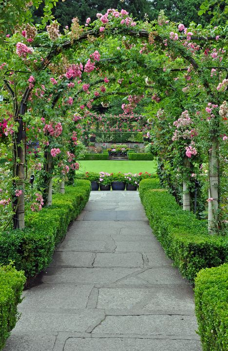 Rose garden archway - Perl Photography