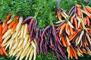 Colorful winter carrots - Perl Photography
