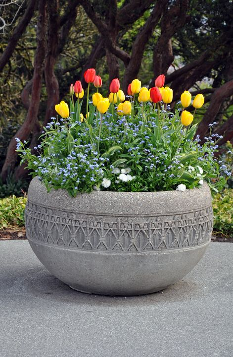 Spring tulips planter - Perl Photography