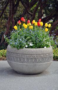 Spring tulips planter
