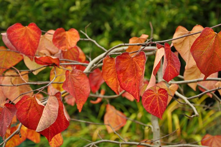 Beautiful autumn leaves - Perl Photography