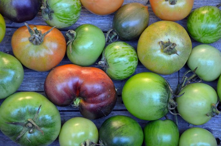 Fresh colorful tomatoes - Perl Photography