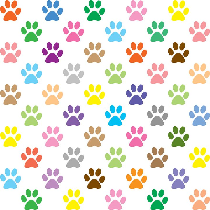 Colorful paws pattern - Perl Photography