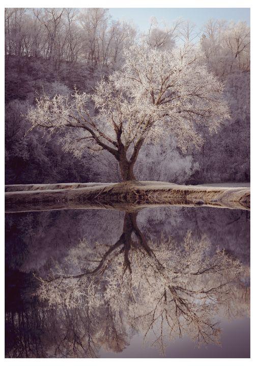 Frost Fantasy - Jodie Morgan