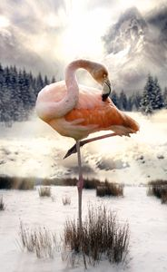 Flamingo in the Snow - BrunoSousa