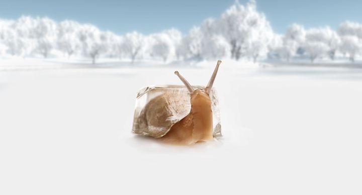 Cool Snail... - BrunoSousa
