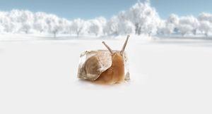 Cool Snail...