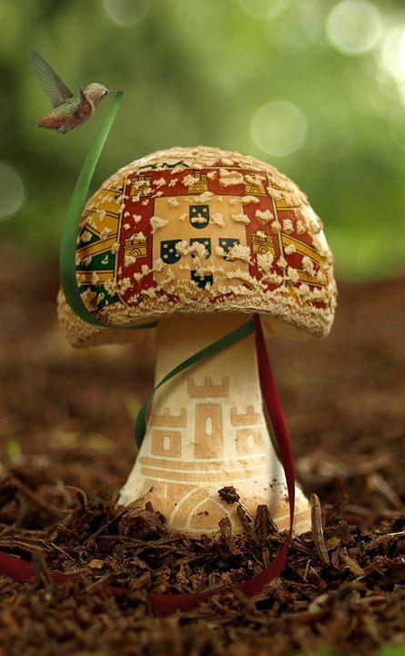 Little Portugal - BrunoSousa