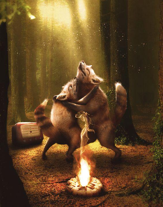 Two foxes dancing - BrunoSousa