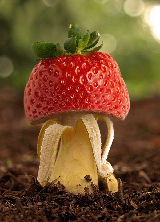 Mushroom - Strawberry and Banana - BrunoSousa