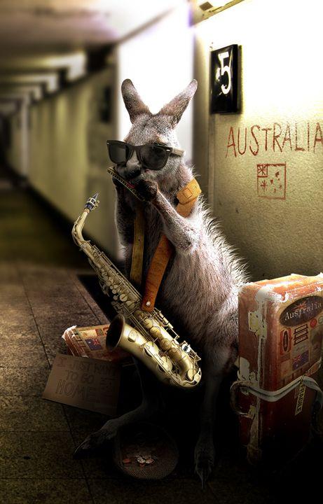 Kangaroo - BrunoSousa