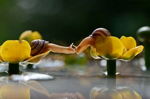 Kissing Snails