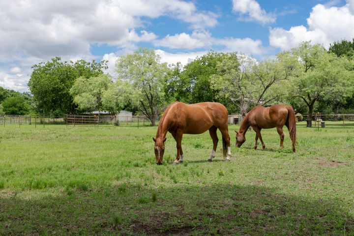 Two Horses Grazing on Grass in a Ran - Photography by Stretch