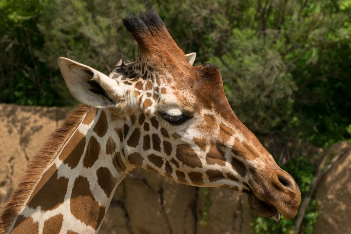 Closeup side profile of Reticulated - Photography by Stretch