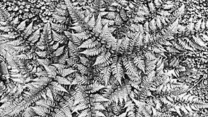 painted ferns - Artsiesfm