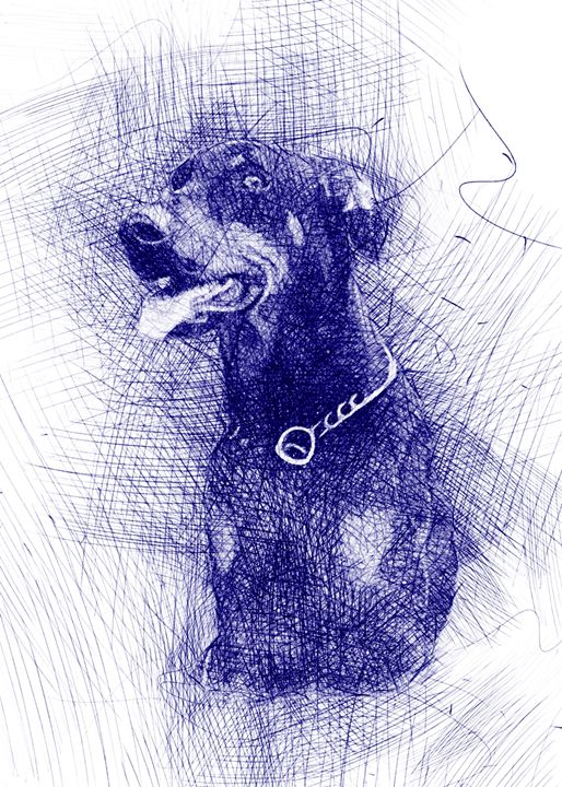 Doberman Pinscher Dog portrait - Pinxeladas