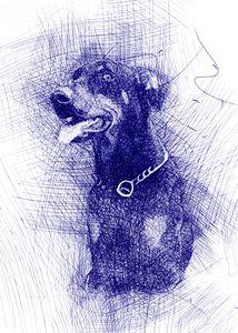 Doberman Pinscher Dog portrait - Pinxeladas