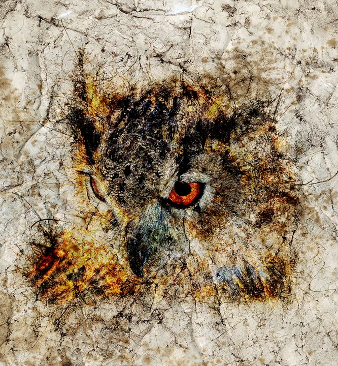 Owl Art Print - Pinxeladas