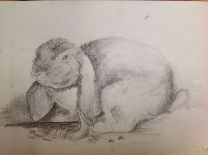 Rabbit - Siranoosh