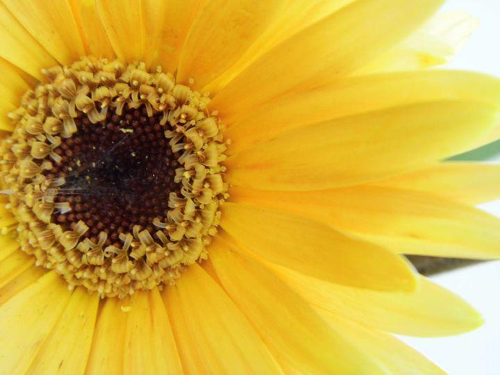 Yellow Flower - Megan Marie's Artwork