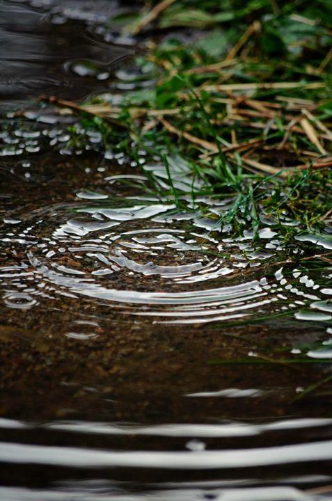 Rain Puddle - Megan Marie's Artwork