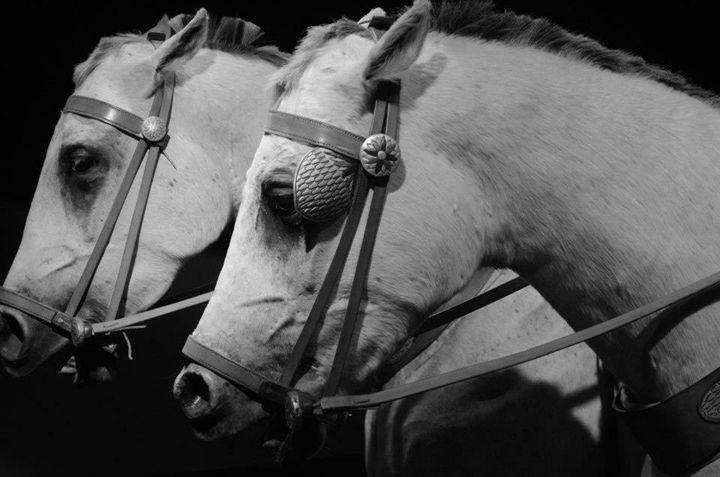Work Horses - Megan Marie's Artwork