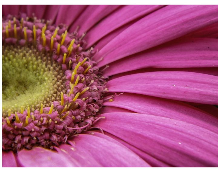 Pink Flower - Megan Marie's Artwork