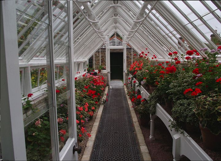 Greenhouse and Geraniums - Maili J McQuaid