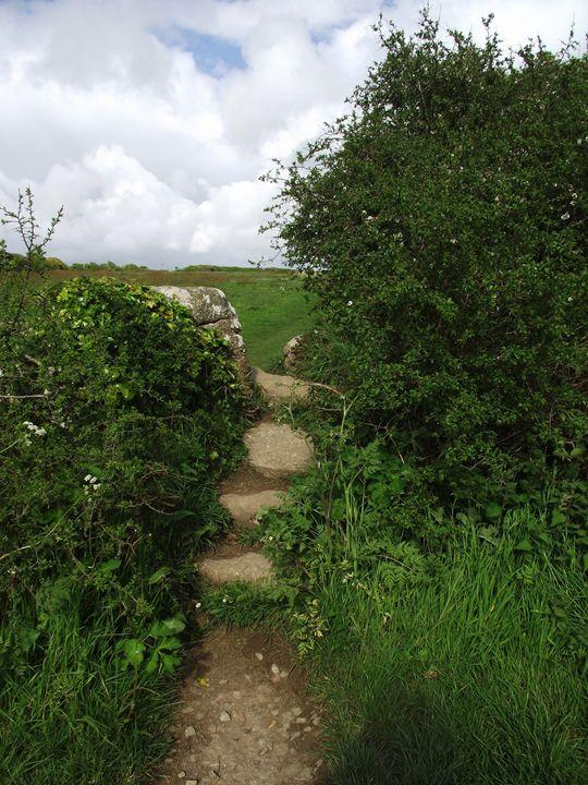 Gate in the hedgeway - Maili J McQuaid