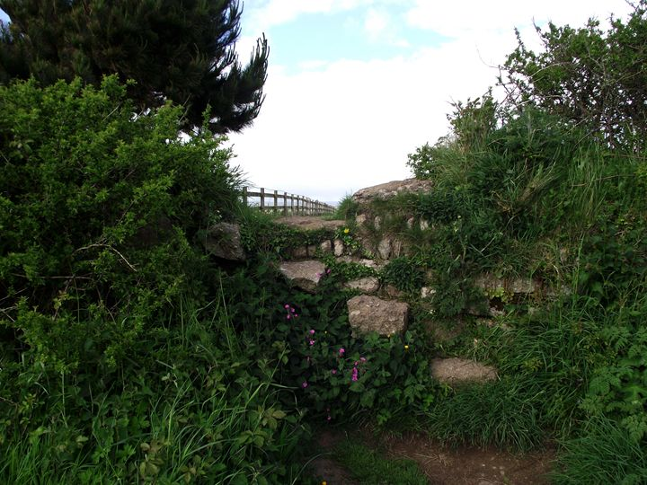 Step into the hedgeway - Maili J McQuaid