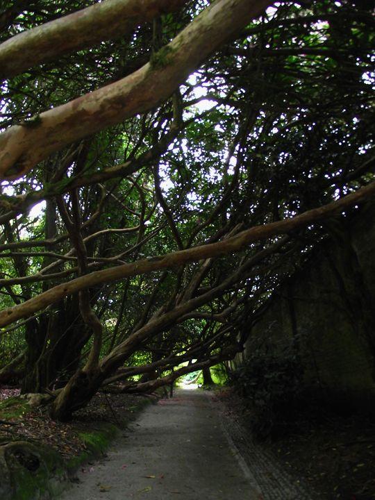 Tree archway - Maili J McQuaid