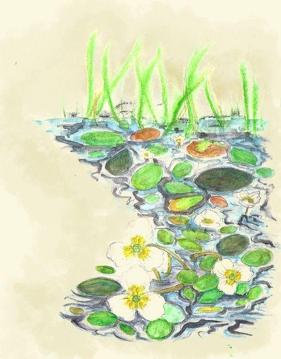 Floating water plantain - Maili J McQuaid