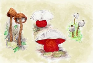 Endangered mushrooms